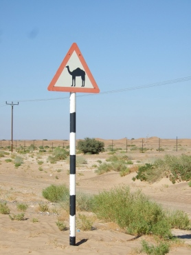 camel-crossing.jpg