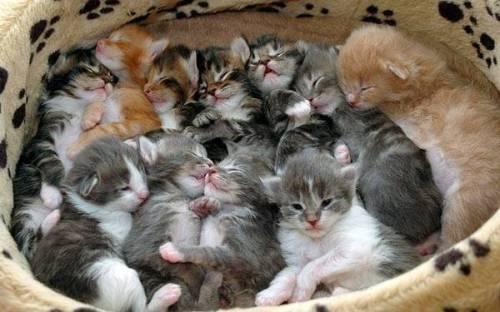 Kittens! Cute Kittens! Chubby kittens! Baby Cats!