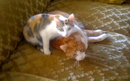 kitten love, whether sanctioned or not, happens everywhere.