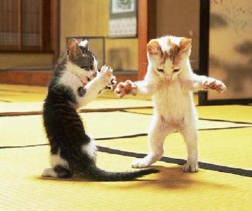 Kitten ninjas, sweet little kitties, deadly cute.