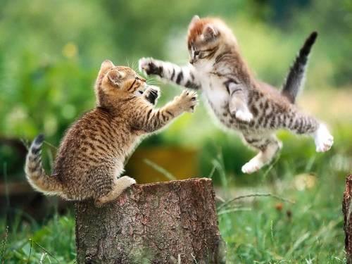 Attack kittens, cute kittens, baby cats, kitties